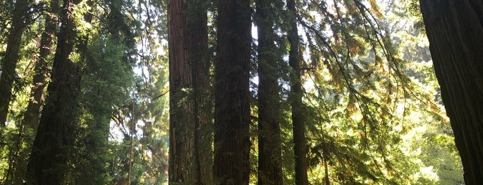 Redwood trail is one of Fun in the Sun.