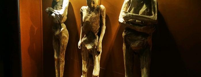 Museo de las Momias de Guanajuato is one of What to do Guanajuato.