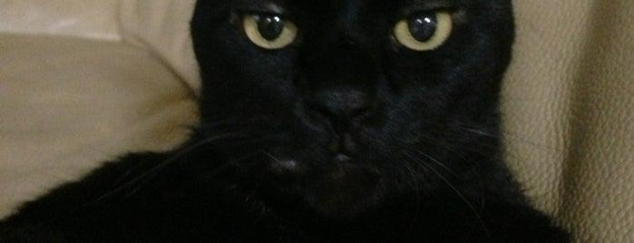 浦安ねこ動物園(個人宅) is one of Favorite Cats.