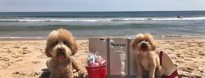 Amagansett Beach is one of NYC Dog-friendly.