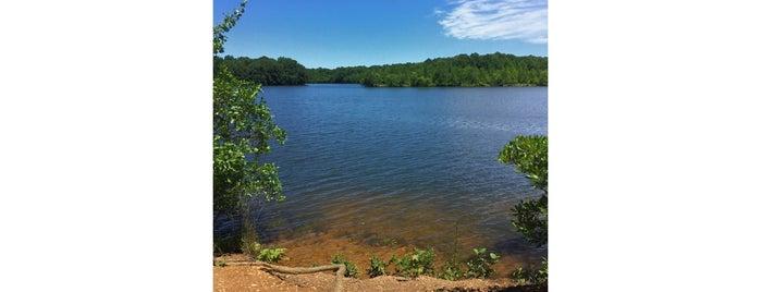 Plainsboro Preserve is one of Lieux sauvegardés par Yasemin.