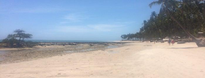 Praia dos Carneiros is one of Locais curtidos por Laila.