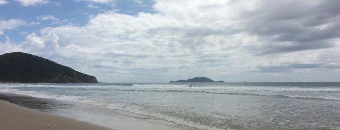 Praia Brava is one of Locais curtidos por Laila.