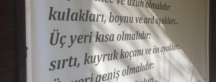 Ankara Atlı Spor Kulübü is one of Lieux qui ont plu à 103372.