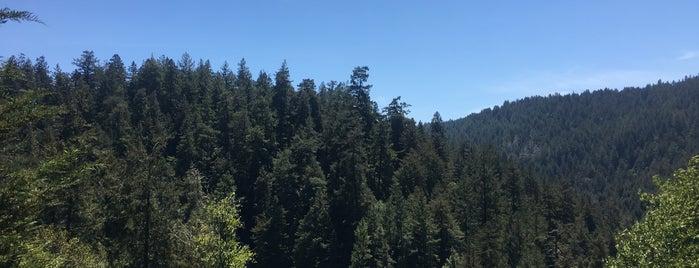 Santa Cruz Redwood RV Resort is one of HWY1: Santa Cruz to Monterey/Carmel.