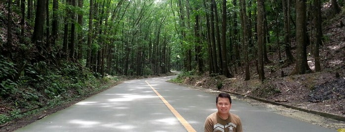 Man-Made Forest is one of Philippines.