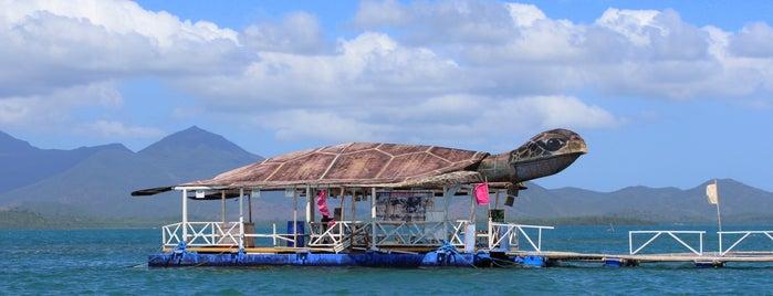 Pambato Coral Reef View is one of Filipinler-Manila ve Palawan Gezilecek Yerler.