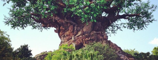 The Tree of Life is one of Top Orlando spots.