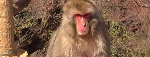 Arashiyama Monkey Park Iwatayama is one of Japan Point of interest.