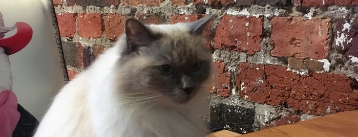 Cat Cafe Melbourne is one of Gespeicherte Orte von Flor.