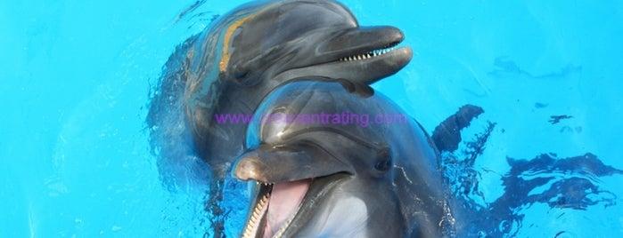 Dubai Dolphinarium is one of Aquariums & Zoos.