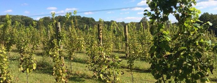 Borderland Vineyard is one of Vineyards, Breweries, Beer Gardens.