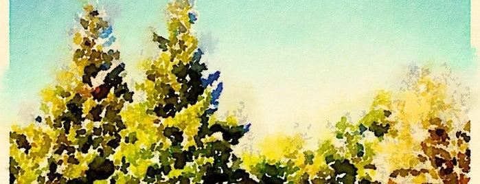 Blossom Hill Park is one of Locais curtidos por Bryan.