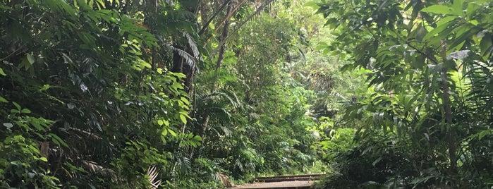 Marang Trail is one of Tempat yang Disukai Ben.