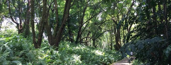 Kent Ridge Park is one of Tempat yang Disukai Ben.
