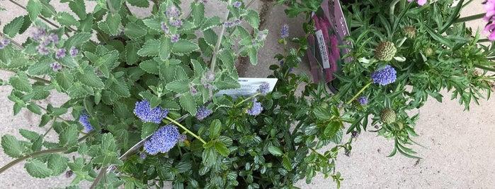 Urban Plant Life is one of Orte, die John gefallen.