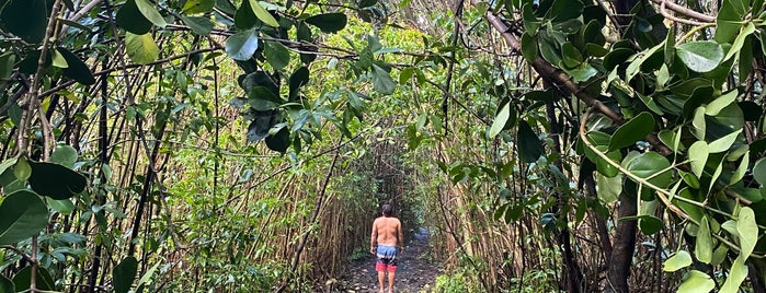 Historic Puna Trail is one of HAWAII.