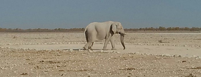 Etosha National Park is one of Jean-François 님이 좋아한 장소.