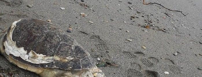 Tosmur Beach is one of Antalya.
