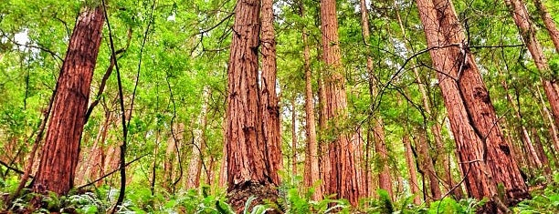Muir Woods National Monument is one of San Francisco!.