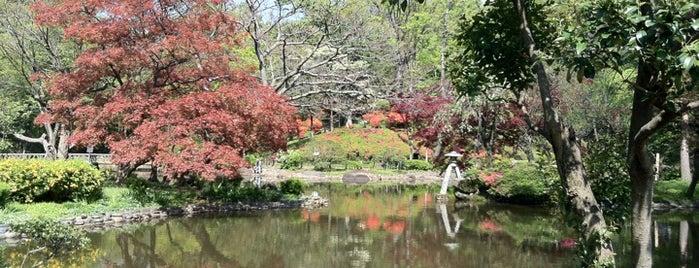 Arisugawa-no-miya Memorial Park is one of Japon Tokio.
