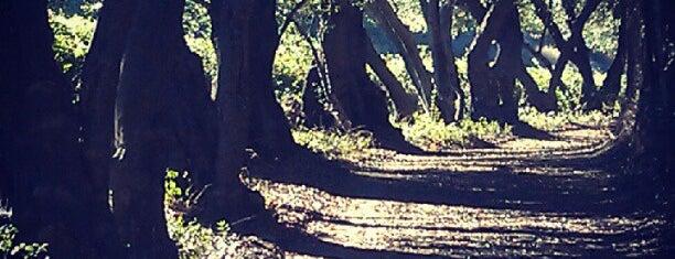 Rancho Las Lomas is one of 💍💍💍.