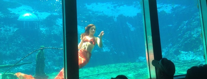 Weeki Wachee Mermaid Show is one of Pixie and Jenna in South Florida.