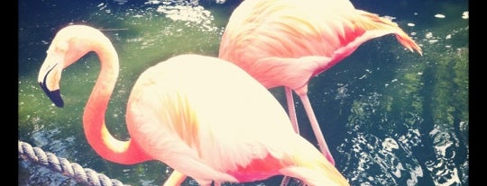 Flamingo Gardens is one of Kids love South Florida.