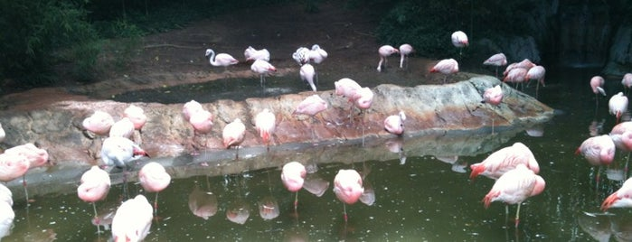Flamingo Exhibit is one of Taniaさんのお気に入りスポット.