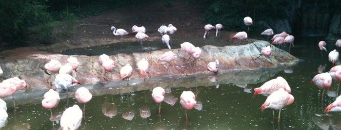 Flamingo Exhibit is one of Lugares favoritos de Tania.