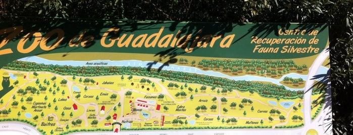 Zoo De Guadalajara is one of MADRID ★ Actividades con Niños ★.