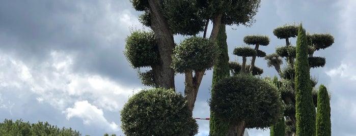 Uzbaş Arboretum is one of Need To Visit.