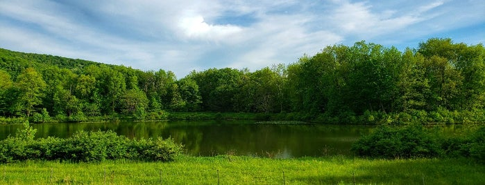 Seneca Nation Territory is one of Native American Cultures, Lands, & History.