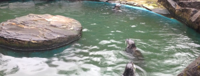 Scottish SEA LIFE Sanctuary is one of Holiday.