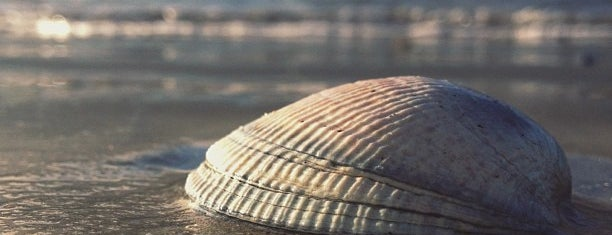 Monterey Municipal Beach is one of Esra'nın Beğendiği Mekanlar.
