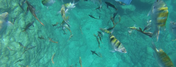 Cantamar Dive & Snorkel Tours Isla Espíritu Santo is one of Jorge 님이 좋아한 장소.