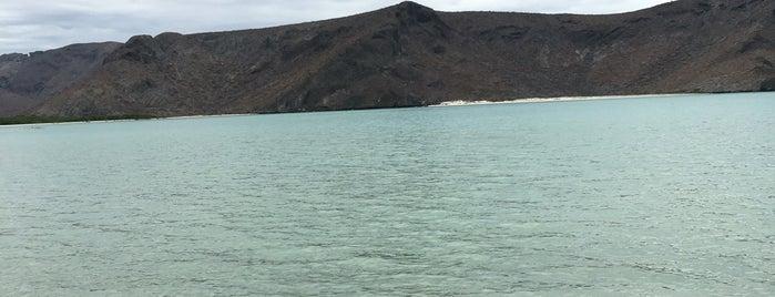 Playa Punta Balandra is one of Jorgeさんのお気に入りスポット.