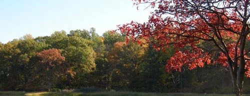 Pelham Bay Park is one of Fall Foliage in NYC Parks.