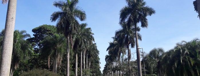Jardim Botânico de São Paulo is one of Raffaelさんのお気に入りスポット.