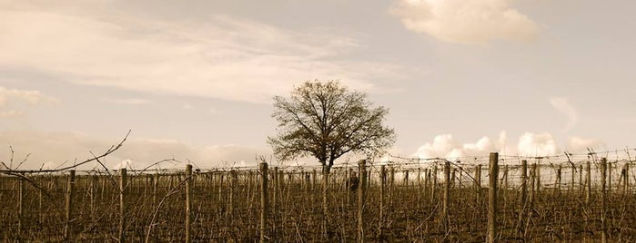 Azienda Agricola Leuta - vineyard - is one of italy.