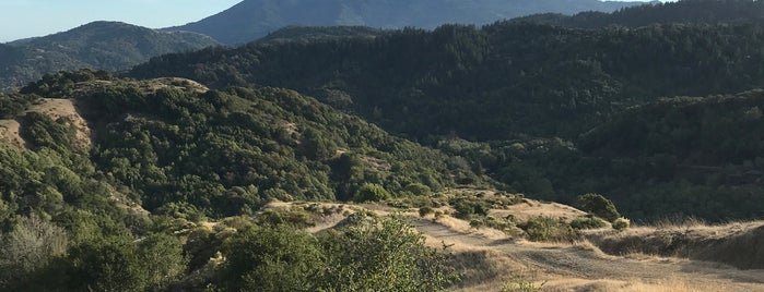 Gun Shot Fireroad Trail is one of Marin County's Best.