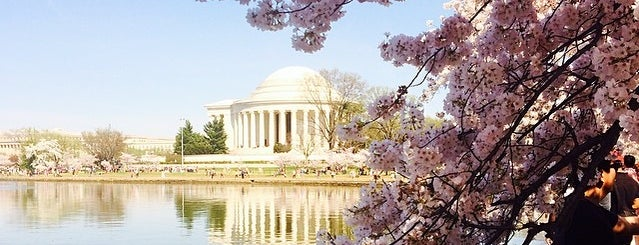 "National Cherry Blossom Festival is one of DMV ""Within the Hour"" Bucketlist."