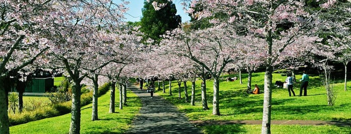 Cherry Grove is one of NZ.