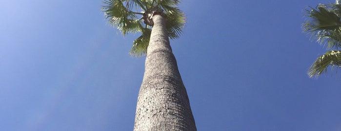 Catalina Island Spa is one of สถานที่ที่ Seth ถูกใจ.
