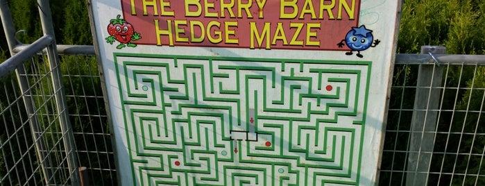 The Berry Barn Hedge Maze is one of สถานที่ที่ Clarissa ถูกใจ.