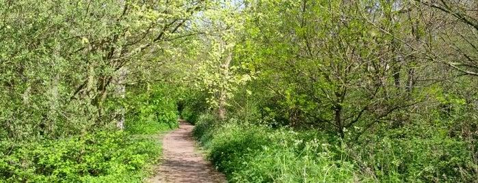 Wormwood Scrubs Park is one of Lieux qui ont plu à Pippa.