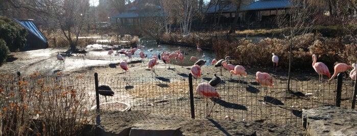 Lincoln Park Zoo is one of Lugares favoritos de Roberto.