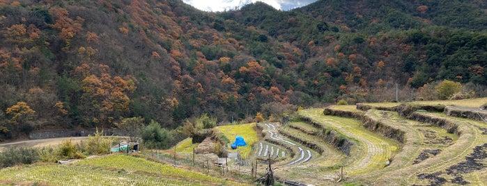 中山千枚田 is one of 小豆島の旅.