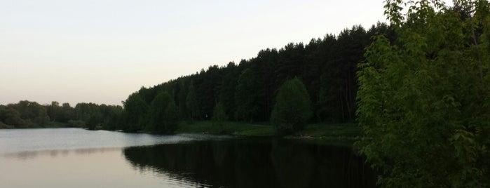 Набережная, пляж Петрицы is one of Западный Климовск.