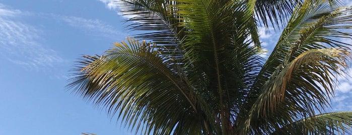 Espaço Bambu is one of Adelino'nun Beğendiği Mekanlar.
